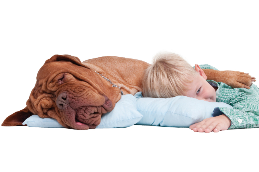 boy-dog-on-floor-new.jpg