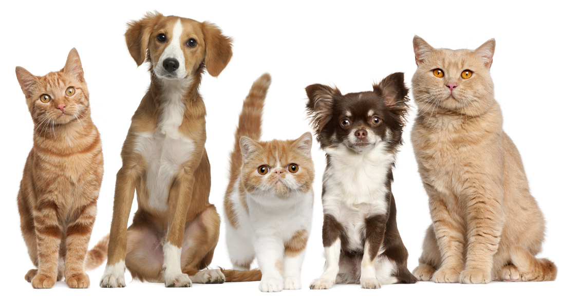 cats-and-dogs-group-new.jpg