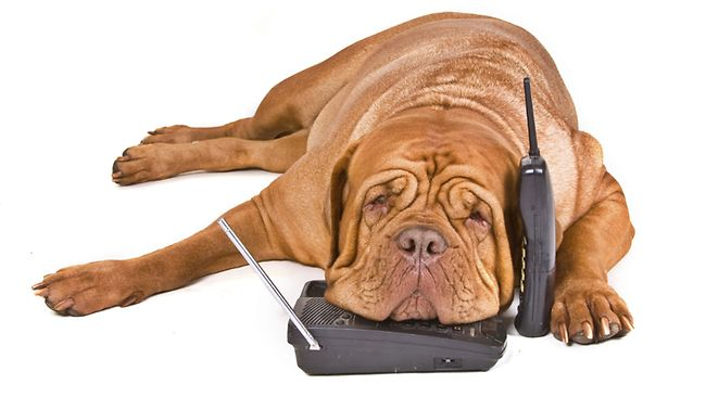 dog-phone-calling-new.jpg