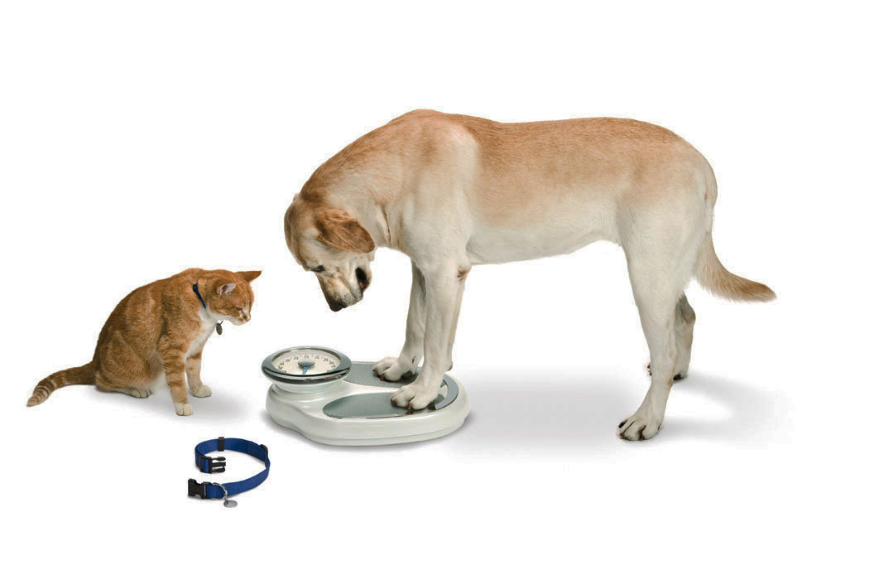 dog-standing-on-scale-new.jpg