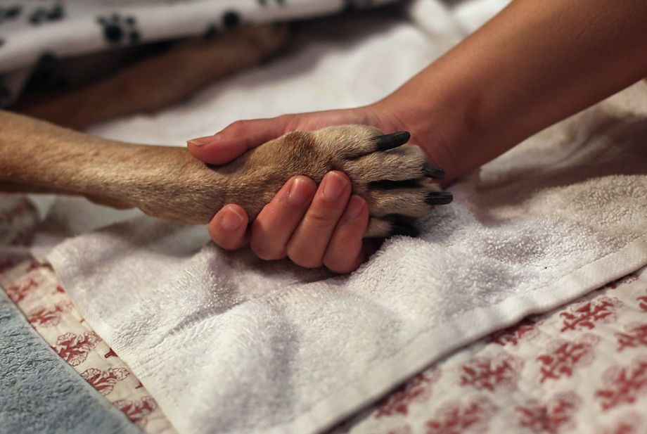 How to Prepare to Say Goodbye to Your Beloved Pet? | Padonia